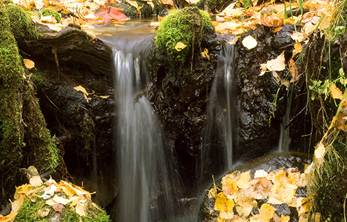 Bild_Naturbestattung